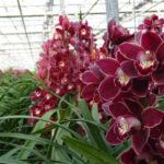 Present Orchids
